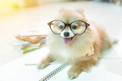 眼鏡をかけて考える犬