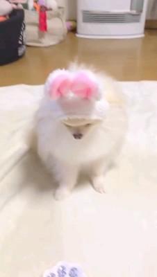 オヤツみる白い犬