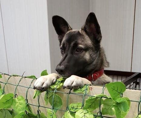覗いている犬