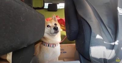 ドライブへ行くよ