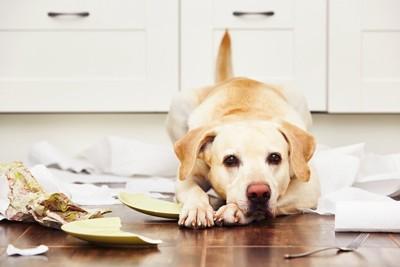 キッチンでいたずらをしている犬