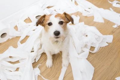 部屋でいたずらをして紙を散らかしている犬