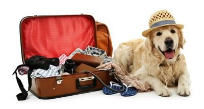 旅行鞄とゴールデン