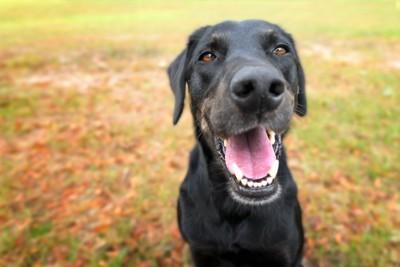 元気いっぱいの犬