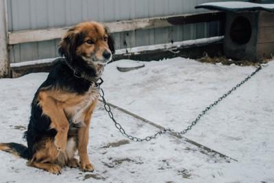 雪の日に外に繋がれている犬