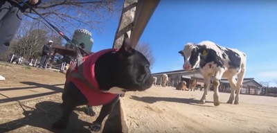 牛とココちゃん