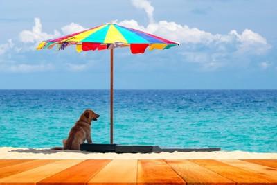 海辺でパラソルの下で座る犬