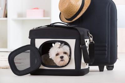キャリーケースの中に入った白い犬