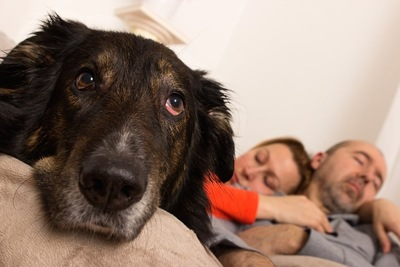 眠るカップルと退屈そうな犬