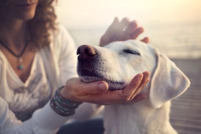人の手に顎を乗せている犬