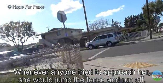 柵を跳び越える犬