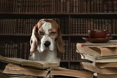 たくさんの本とメガネをかけているビーグル犬