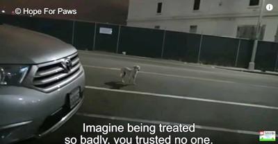 道路で犬を発見