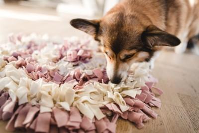 嗅覚訓練マットと犬