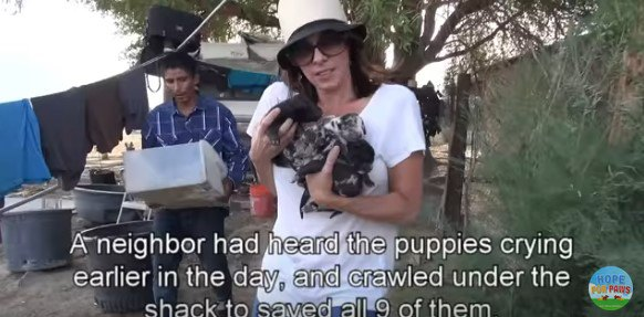 子犬を運ぶ人