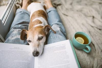 飼い主さんの足の間でリラックスする犬