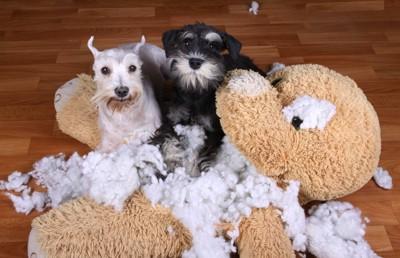 ぬいぐるみの綿を出した二頭の犬