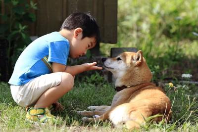 柴犬に話しかけている男の子