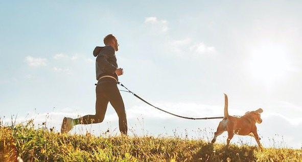 男性と一緒に走って散歩をする犬