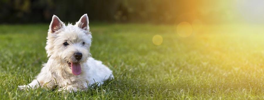 庭に座る犬
