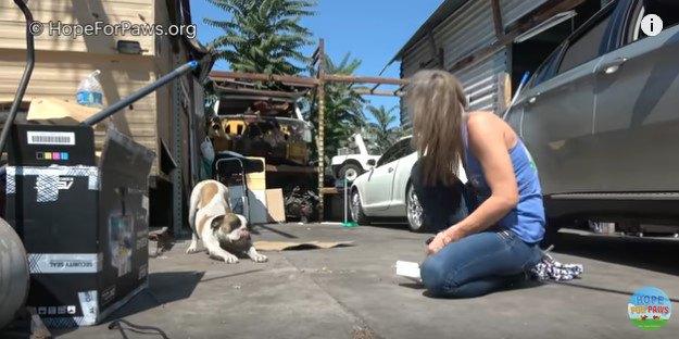 伸びをする犬