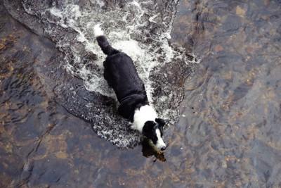 川へ入っていく犬の後ろ姿