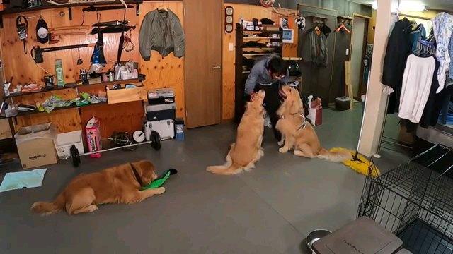 二匹の犬を撫でる人