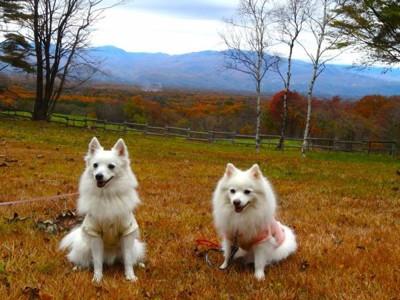 浅間高原をバックに犬