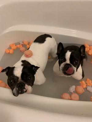 お風呂に入る二匹