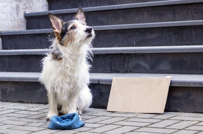 物乞いをする犬犬