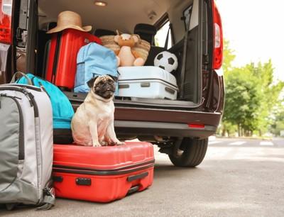 トランクの上に乗っている犬