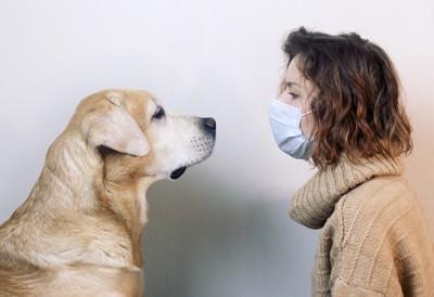 犬と向き合うマスクをした女性