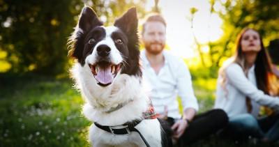 家族と一緒に屋外で幸せそうに過ごす犬
