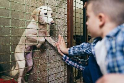 保護犬と会う家族
