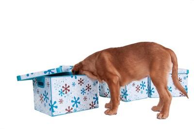 箱の中を探る犬