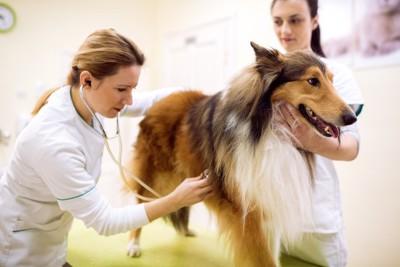 病院で健康診断を受ける犬