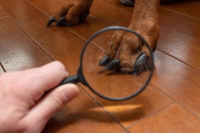 犬の足を見る虫眼鏡