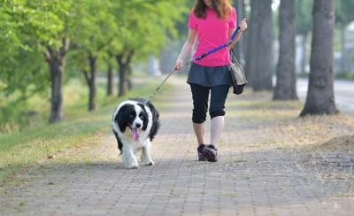 ボーダーコリーと散歩をする女性