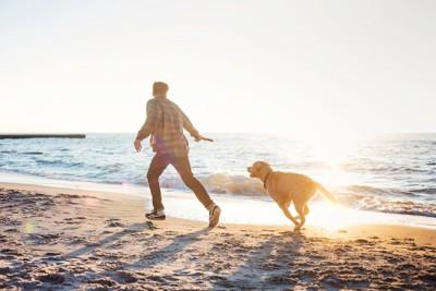 浜辺で飼い主を追って走る犬