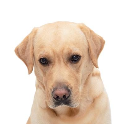 こちらを見つめている犬