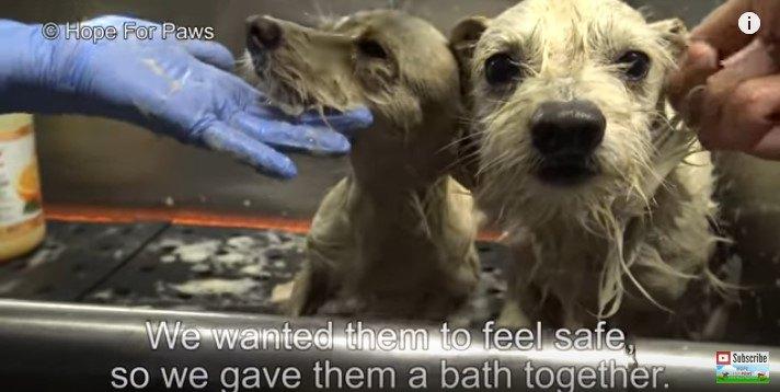 一緒にシャワーを浴びる犬