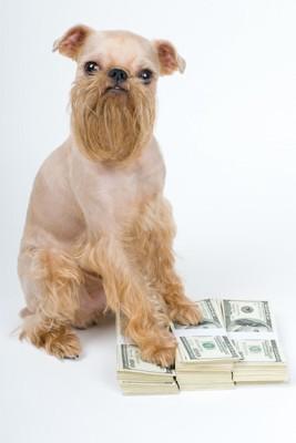お金に手を置く犬