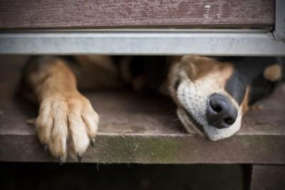 ドアの隙間から覗く犬