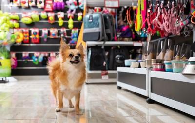 店を歩く犬