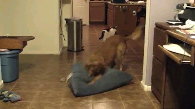 ベッドを取り戻す犬
