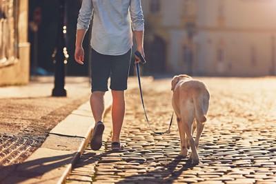 散歩する犬と男性の後ろ姿