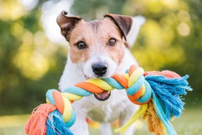 綱を咥えている犬