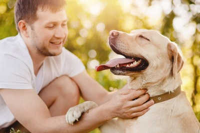 男性に撫でられている犬