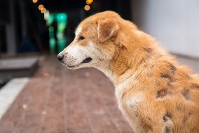 皮膚病の犬