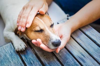 寝ている犬と撫でる手